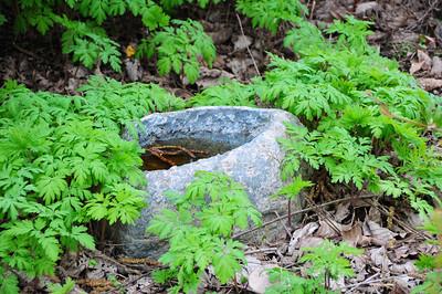 Settings:  Establishing and Maintaining Native Plants