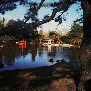 The Japanese garden in Prospect Park, from December 1982.