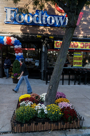 Beautiful flowers surround a Vanderbilt Avenue tree in front of the lovely new Foodtown market in Prospect Heights.