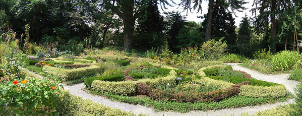 View from the south edge of the Herb Garden.  The ginkgos are in the back.