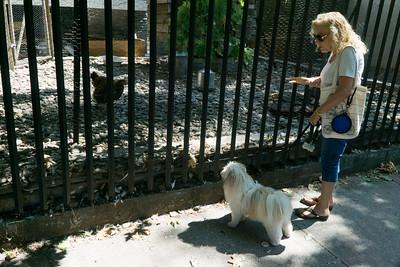 """Yes, Biggie. That's a chicken."""