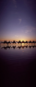 B5-Cable Beach Camels 4