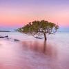 BM548025 The one Tree, Broome