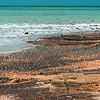 migratory birds in Broome