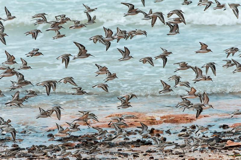 migratory birds 0715_0315 copy_01
