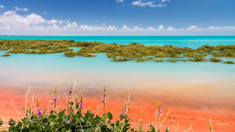 BM5440222 Typical flowers along Roebuck bay, Broome