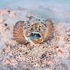 Stoefish