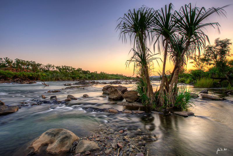 Pandanus trees along the Ord river