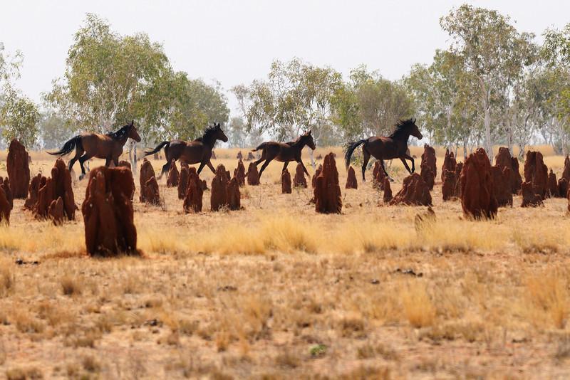 Wild horses 082011-00197-0744-