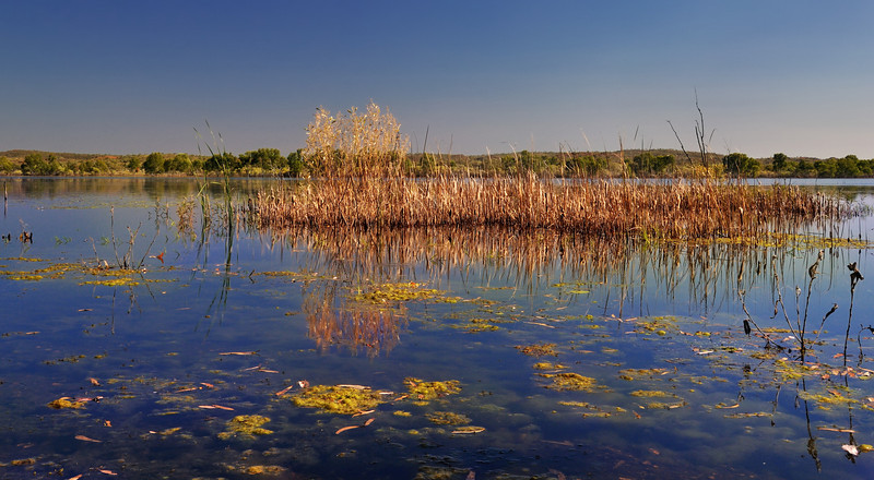 Reeds 062011-00183-0007c-