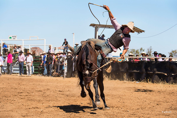Rodeo HC-00495-_0380 copy