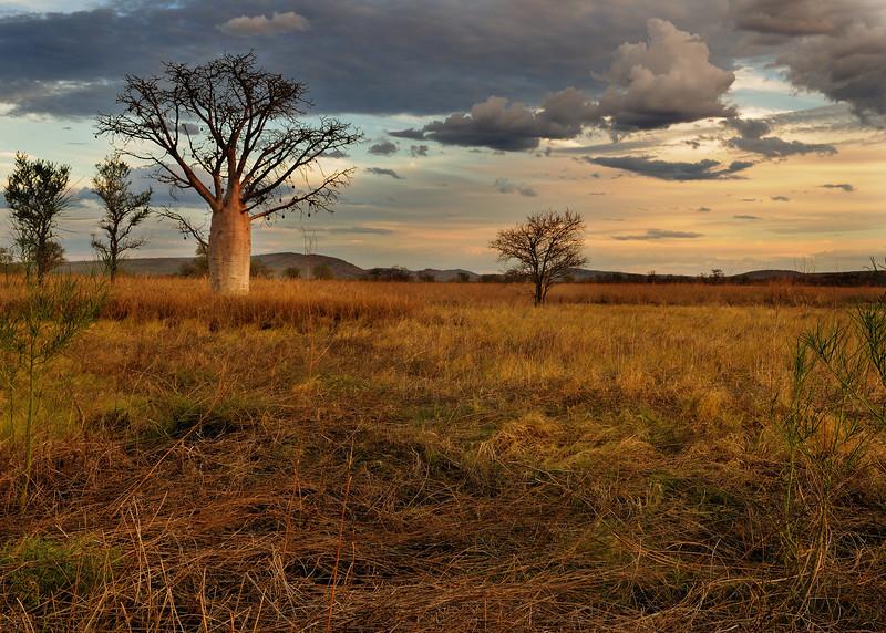 Kimberley plain, spectacular savannah lands, Wyndham area