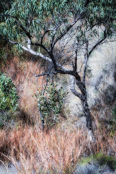 bush prospect 2016 0761_0039 copy