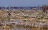 Egret wetland -082011-00197-0384-4x6crop