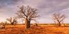 B532037 Boab trees landscape