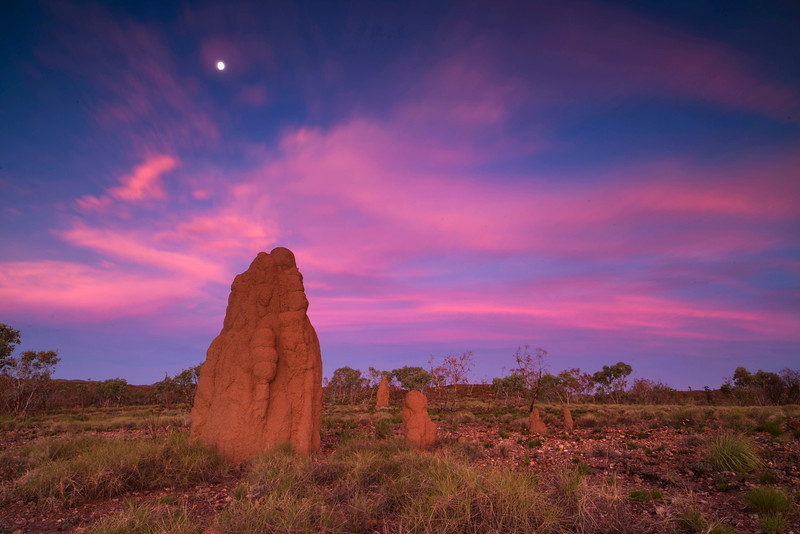 a beautiful sunset in the western Australia bush with the termite mounts<br /> K615062