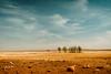 desert plain, Karunjie track