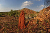 Caroline Pool area, Halls Creek, Kimberley WA<br /> walking further inside the gorge a more dramatic landscape can be seen