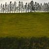 Tree line NZ-00459-_0190