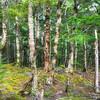 Forest NZ-00458-_0354