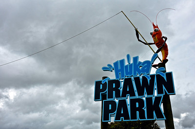 Taupo Prawn Park January 2014