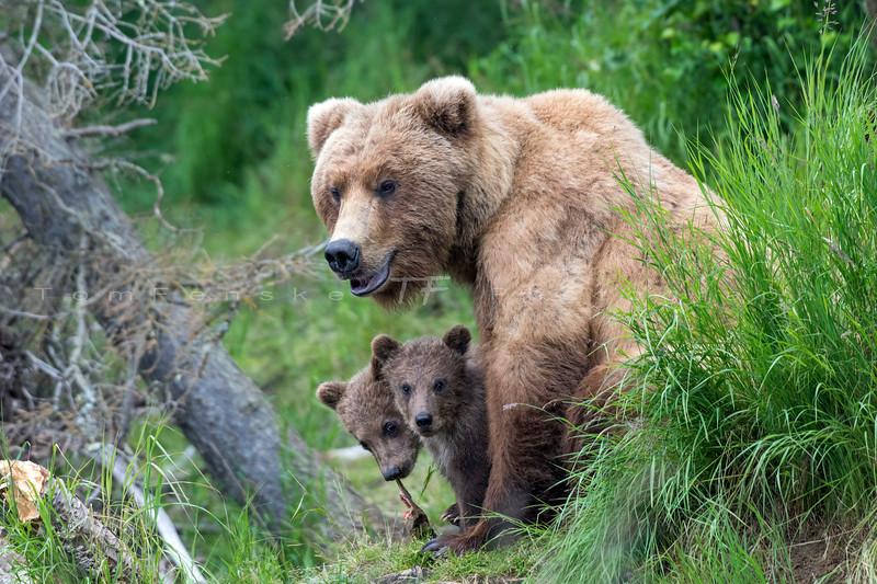 Katmai Bears 2019