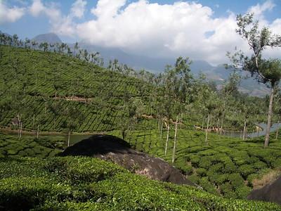 Kerala - Munnar and Cochin