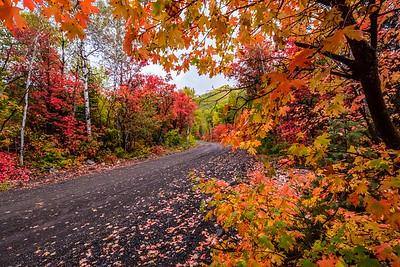 Foliage Road