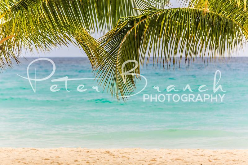 Coconut Tree Love Barbados