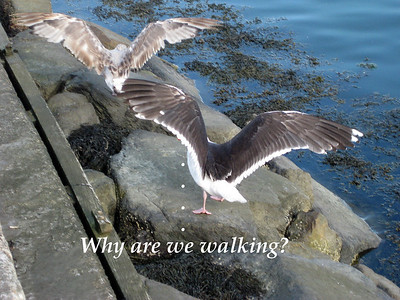 why are we walking textt
