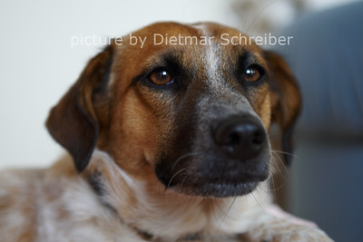2012-09-17 Alisha