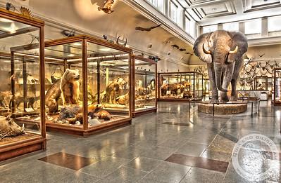 Museeum of Natural Science, Gothenburg, Sweden.