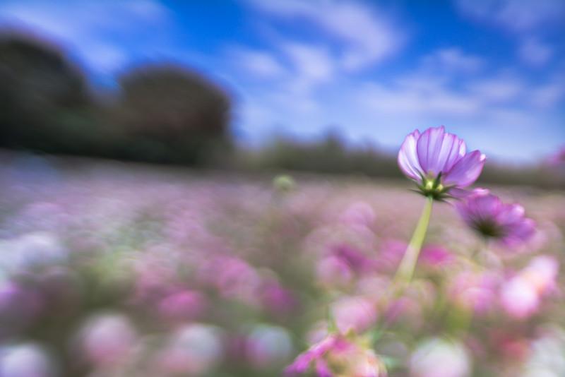 highest flower of garden