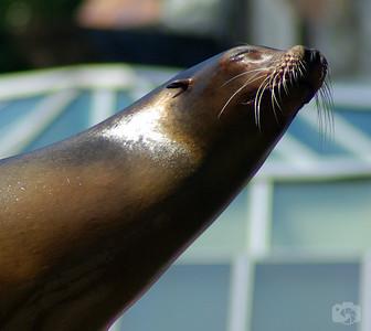 Sun bathing Sea Lion