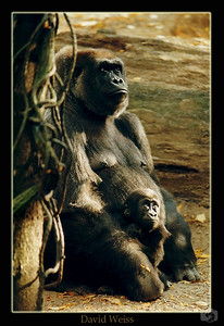 Mother and child - Bronx Zoo, NY