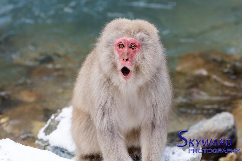 Shocked Monkey?