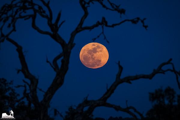 Full Moon View