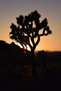 Sunset   Joshua Tree National Park