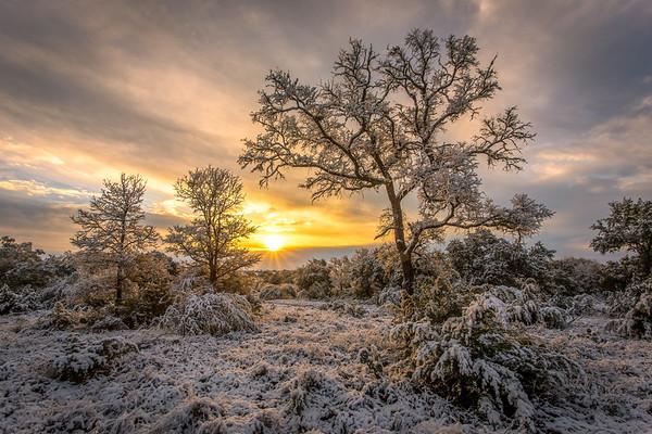 Glorious Winter Sunrise