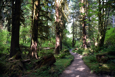 Hoh Rain Forest | Olympic National Park