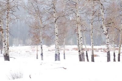 Aspen Winter