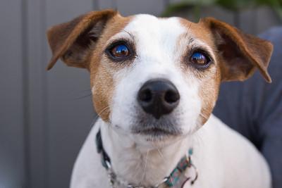 WAAG Pet Photos