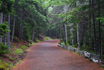 Carriage Road | Acadia National Park