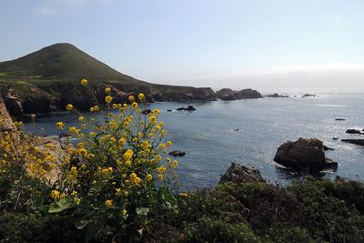 Moonstone Beach | California Coast