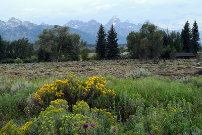 Wildflowers | Grand Teton National Park