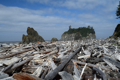 Ruby Beach Driftwood | Olympic National Park