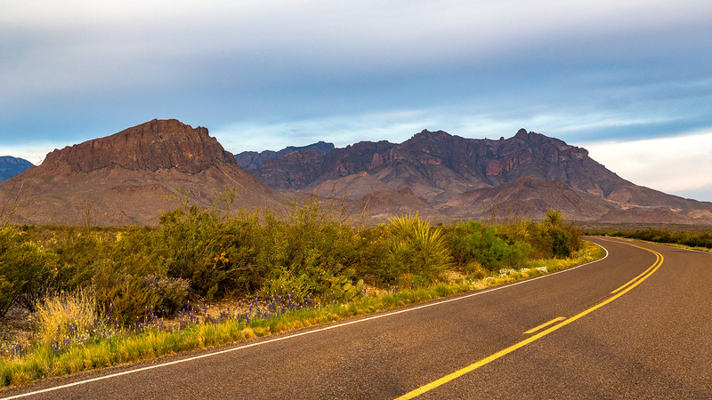 Roadside Bluebonnets and the Chisos
