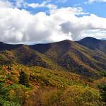 Blue Ridge Foliage | Blue Ridge Parkway
