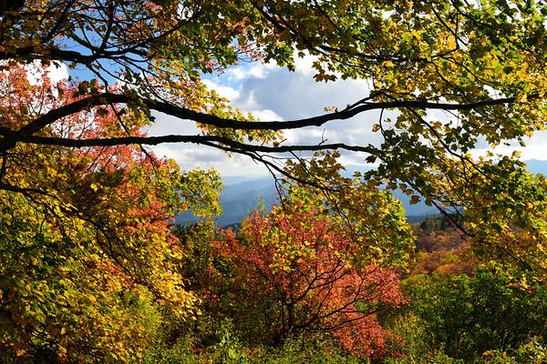 Golden Autumn   Blue Ridge Parkway
