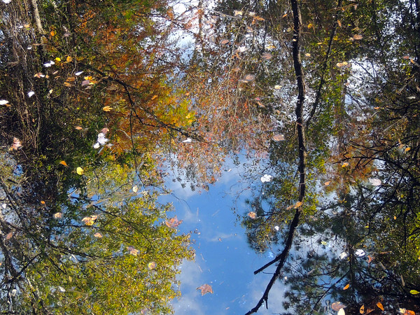 Autumn Reflections | Smamp Fox Trail